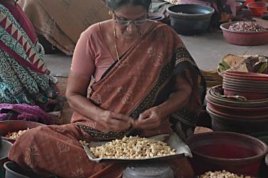 Women picking shells off cashew nuts.
